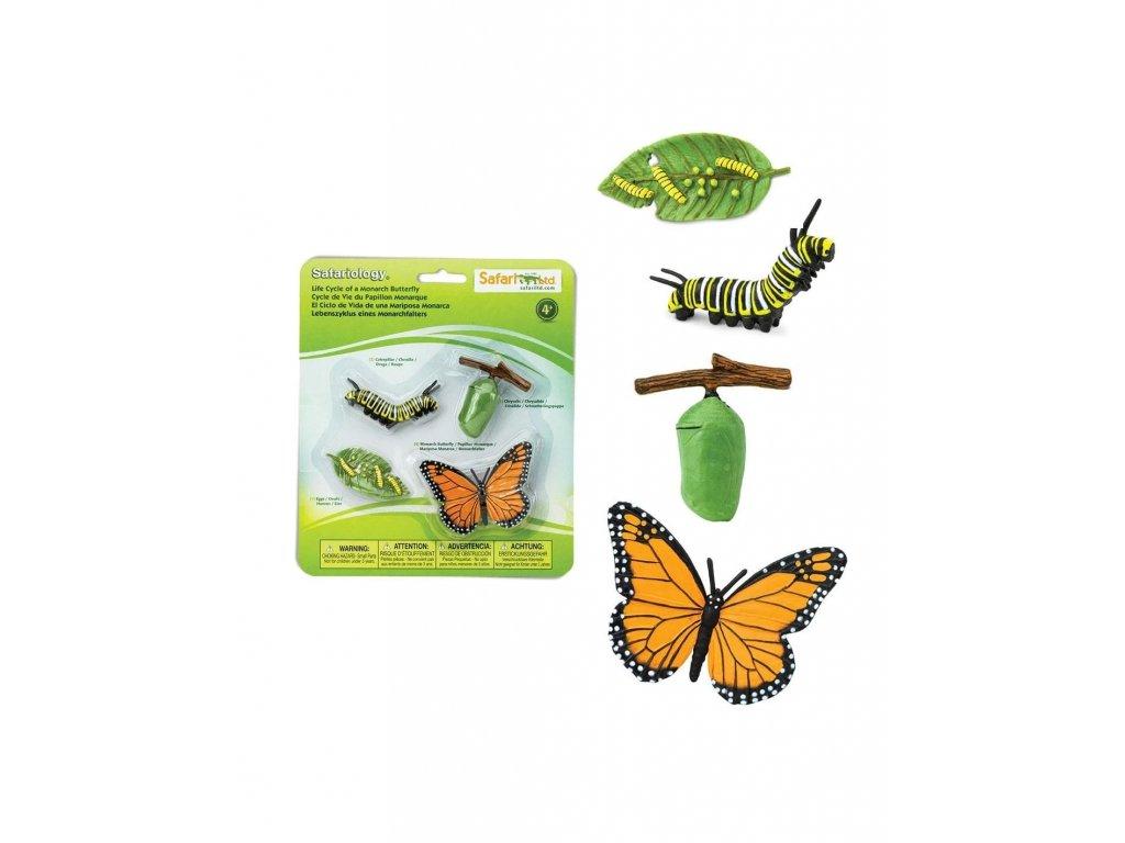 zivotni cyklus motyl